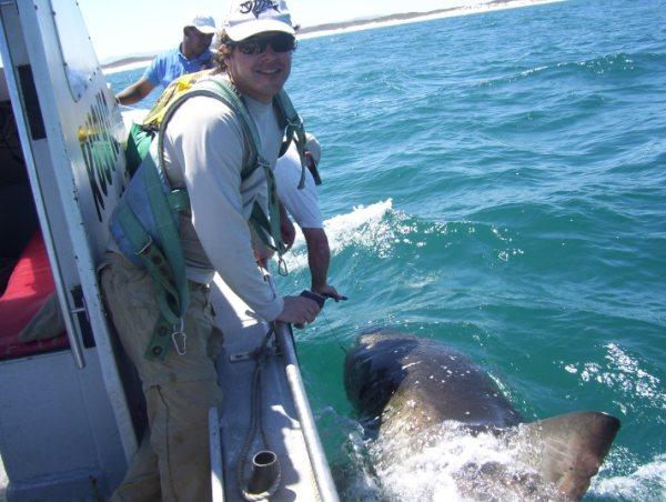 Great white shark fishing extreme angler for Great white shark fishing